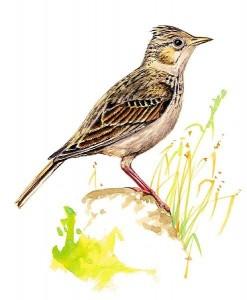 Rádio, které pouští pouze ptačí zpěv....
